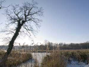 Upton Broad - frozen