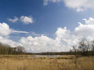Upton Broad - reeds and clouds