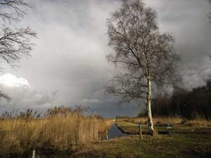 Birch tree and dyke - clearing storm clouds