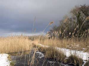 Storm clouds over snow and reeds