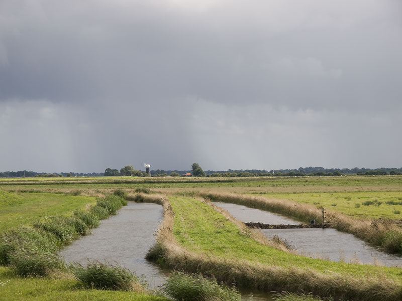 Pictures of Upton Fen and marshes